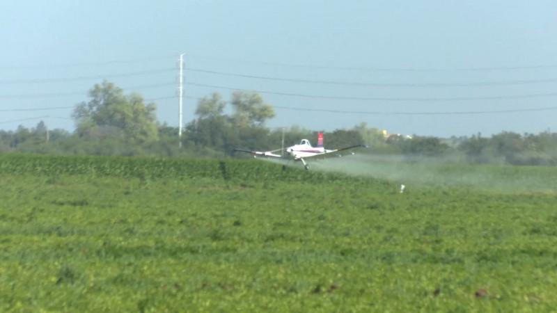 Exhortan a agricultores a cuidar cultivos vecinos