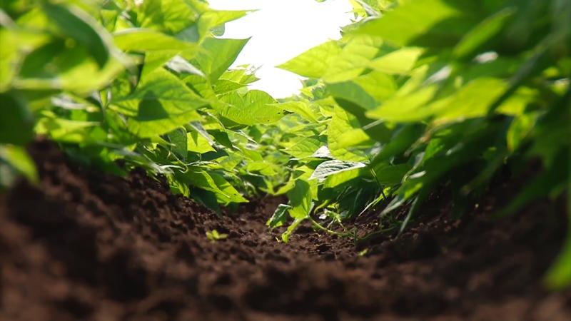 Agricultores del Sur del Estado, necesitan infraestructura de riego: AARP