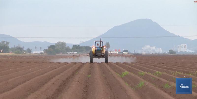 Situación alarmante para agricultura comercial, tiene el Presupuesto 2020