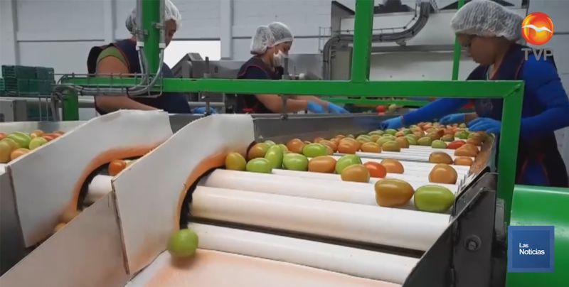 Productores de tomate recibirán el reembolso por arancel pagado