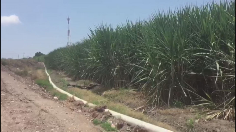 Faltan mas recursos para investigación de nuevas variedades de caña de azúcar
