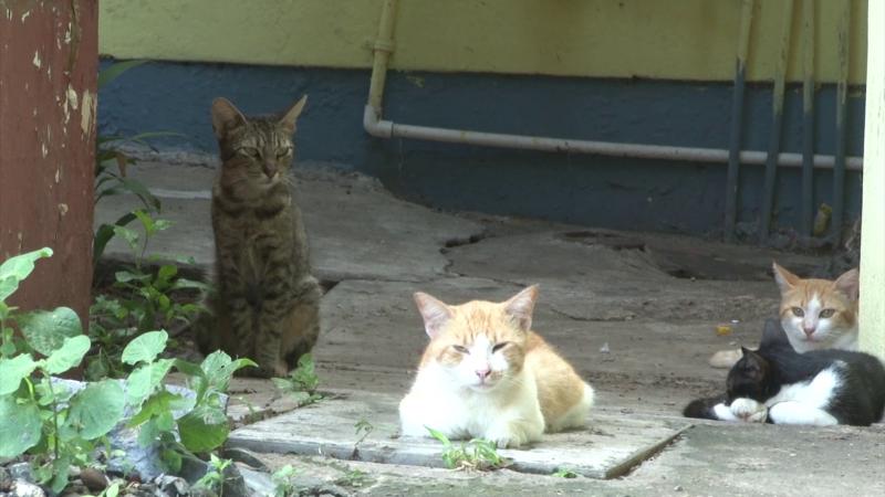 Proliferan gatos en área verde del infonavit El Conchi
