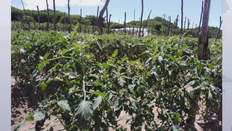 La superficie de siembra de hortalizas está supeditada a los volúmenes de agua en presas