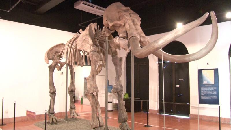 ¡Aún puedes conocer los restos del mamut de Ecatepec!