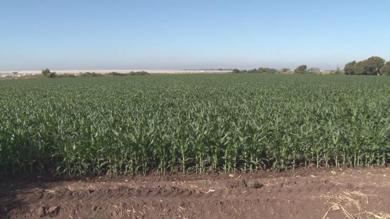 Se pronuncian organizaciones agrícolas por un diálogo rumbo al presupuesto al campo para 2020