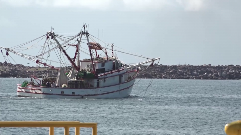 Tristes armadores de Mazatlán ante bajas capturas de camarón