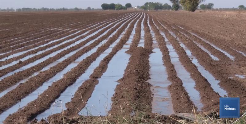 Sanidad Vegetal recomendó a productores sembrar en tiempo y forma