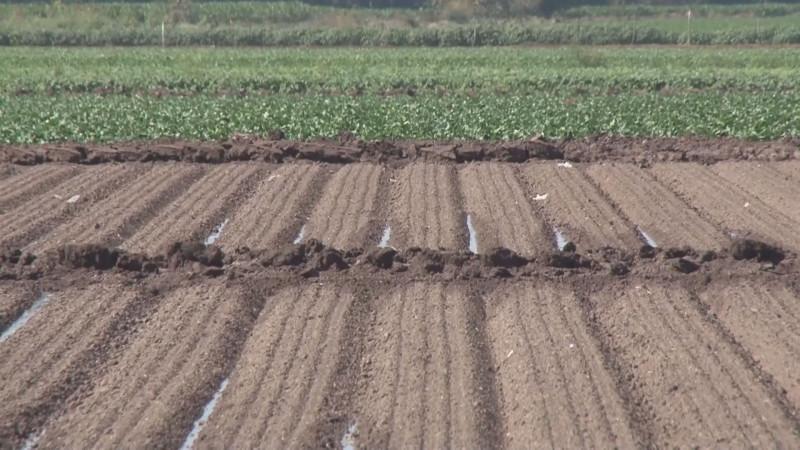 Agua en presas solo alcanza para sembrar el 30 por ciento de la superficie con maíz blanco