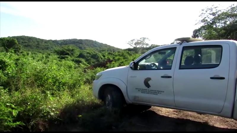 Sin identificar 39 cuerpos en Mazatlán