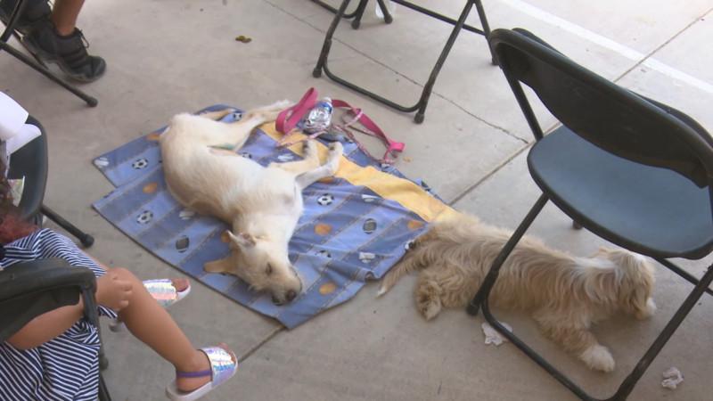Un éxito la campaña de esterilización de mascotas