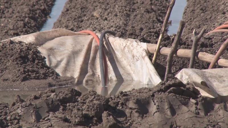 Faltan recursos federales para implementar un programa de rescate de agua para riego