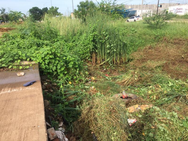 Lleno de maleza y basura canal pluvial del arroyo Jabalines