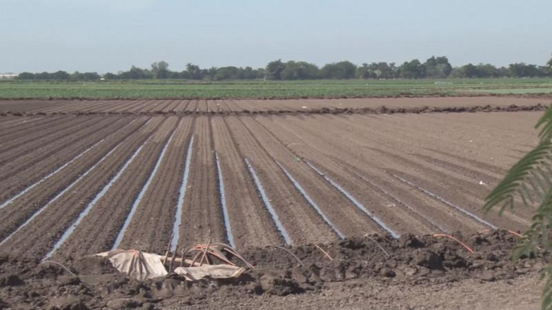 Nuevo Impuesto al Agua dañará la rentabilidad de los productores agrícolas