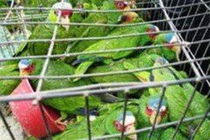 Alarma en México el tráfico y muerte de animales