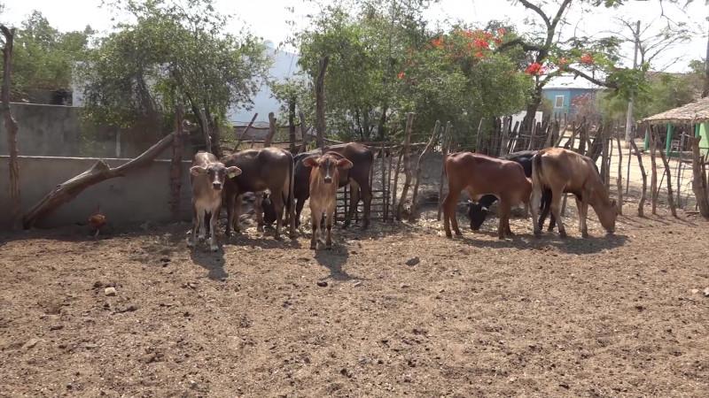 Armarán frente ganaderos mazatlecos para pelear por el PEF 2020