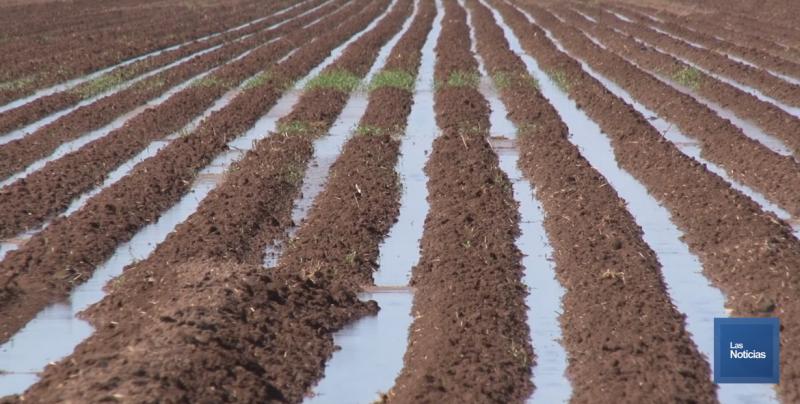 Se proyectan sembrar 212 mil hectáreas en el Valle del Yaqui