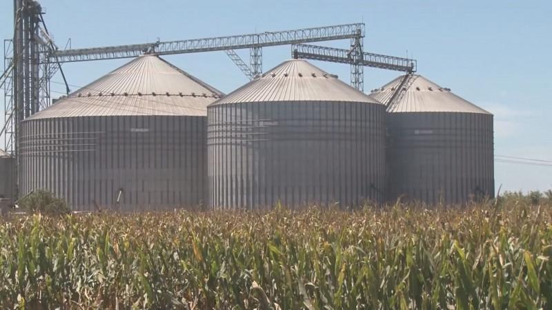 Instalarán mesa técnica para diseñar esquemas de la producción de maíz