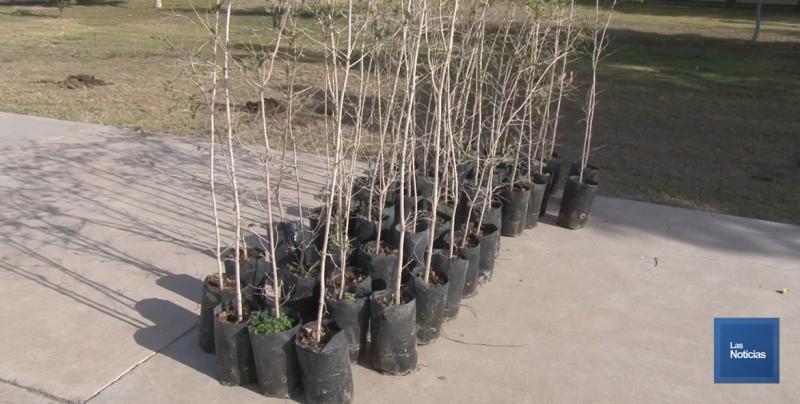 Falta de presupuesto a CONAFOR, frenó entrega de árboles