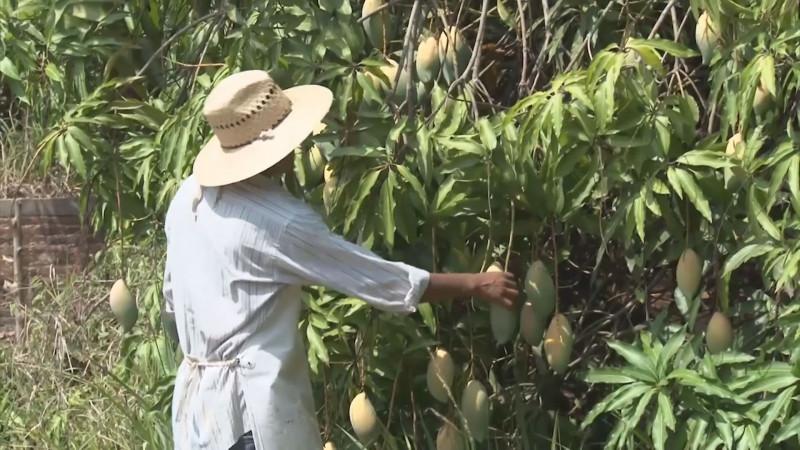 Exhorta CESAVESIN  a horticultores y propietarios de huertas acatar recomendaciones sanitarias