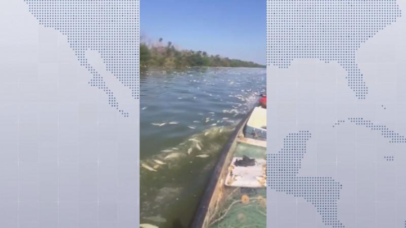 Levantan cerco sanitario en Escuinapa, tras mortandad de peces