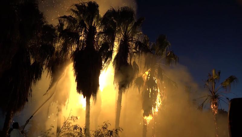 Se incendian palmeras a un costado de tienda de autoservicios