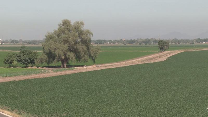 Plantearán productores de Sinaloa bancarizar los apoyos y programas del campo