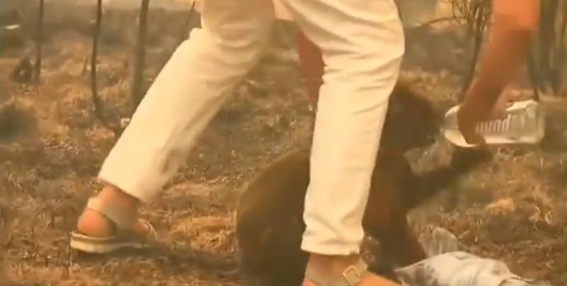 Captan en video cómo mujer rescata a koala de incendio en Australia