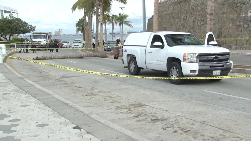 Muere trabajador del ayuntamiento al caerle palmera encima