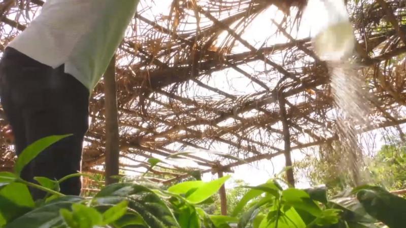 Sembrando Vida no aplica para zonas temporaleras de Sinaloa