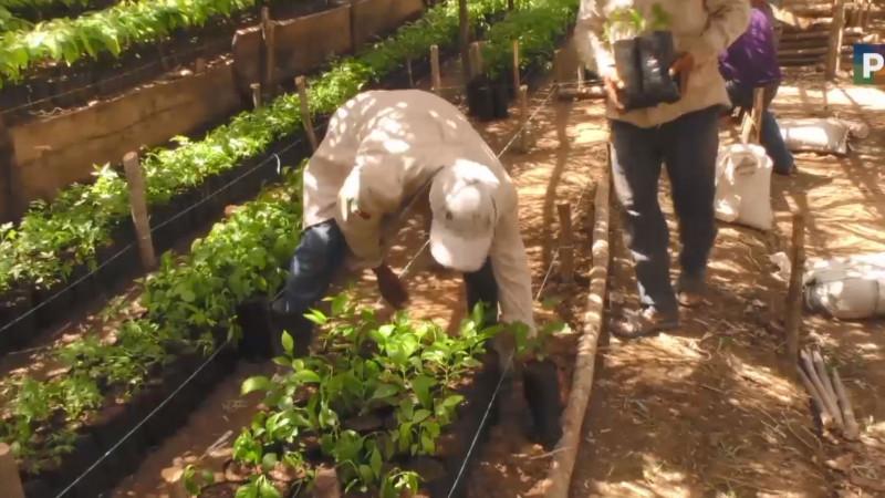 La zona serrana y Cacaxtla pueden beneficiarse con el programa Sembrando Vida