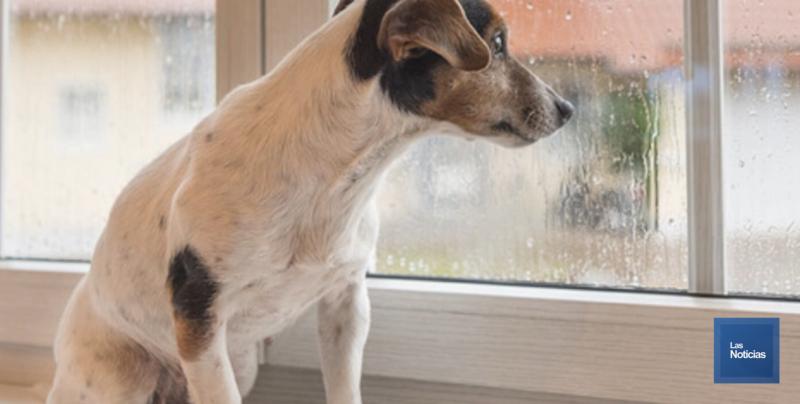 Pide no aplicar descuentos en multas por maltrato animal