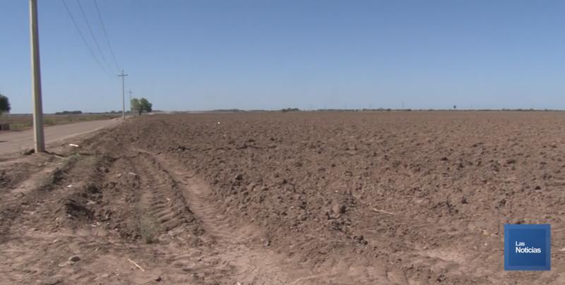 Siguen las acciones de riego en los cultivos del Valle del Yaqui