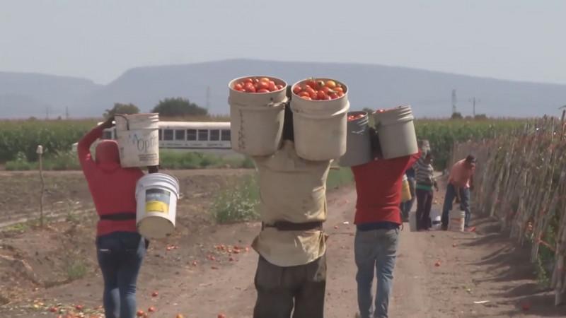Afectados los trabajadores migrantes con los subsidios que fueron eliminados para jornaleros