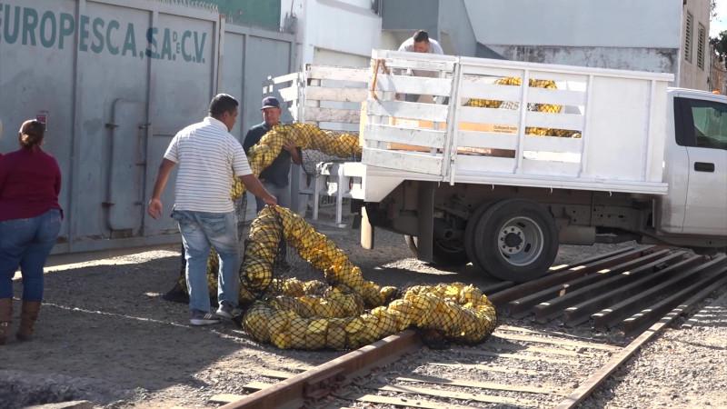 Se fortalece la 'amiga ambiental' de Mazatlán