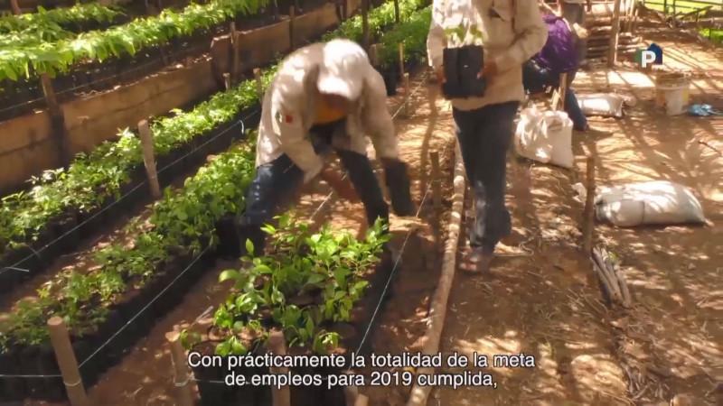 Destinarán mas de 600 mdp para el Programa Sembrando Vida en Sinaloa