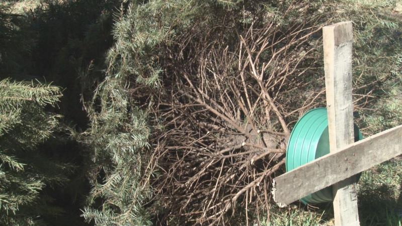 Zoológico de Culiacán recibirá árboles de navidad