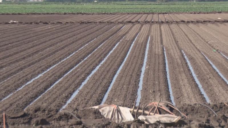 Solo los módulos con disponibilidad de agua podrán establecer un ciclo Primavera-Verano