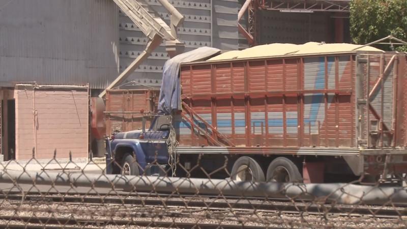 Productores de maíz volverán a ser víctimas de los acopiadores : CAP