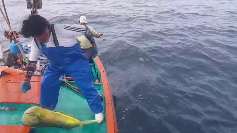 "Pescadores piden liberar captura del ""Dorado"""