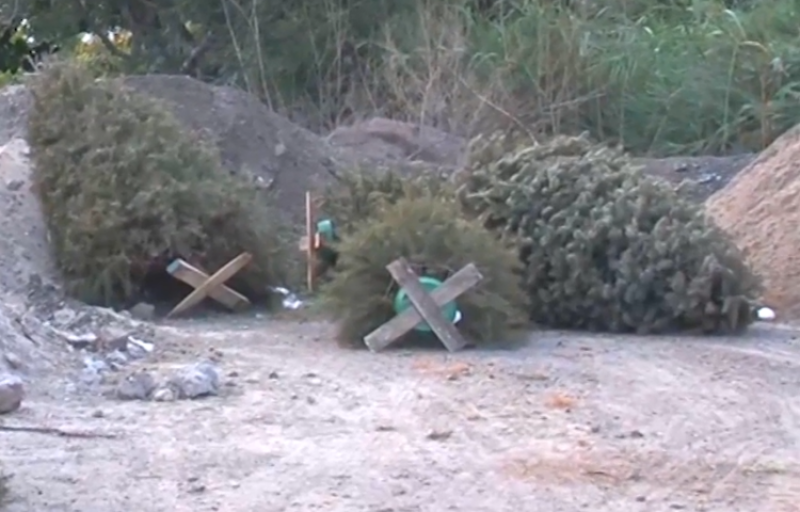 Piden Bomberos no conservar, ni sacar a las calles, pinos navideños secos