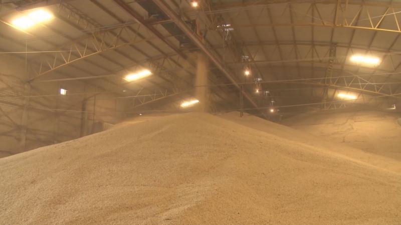 Los organismos agrícolas apoyarán a productores en la compra de coberturas para el maíz