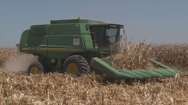 Trabaja el Gobierno federal en un esquema de comercialización para el maíz de Sinaloa