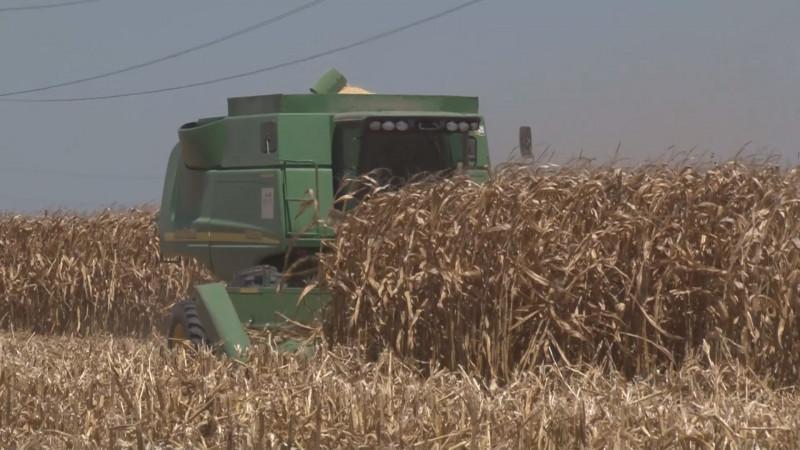 Incremento en importaciones de granos es un efecto de la falta de apoyos al campo : Bosco de la Vega