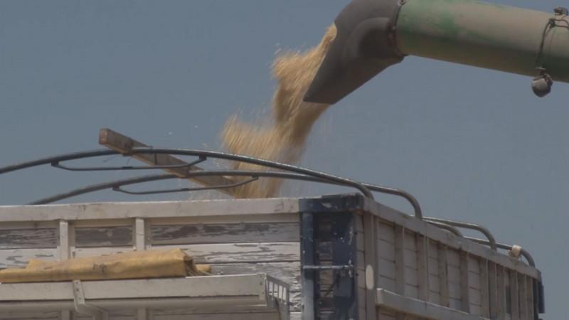 Acepta Gobierno federal esquema de agricultura por contrato , pero sin ningún apoyo al productor