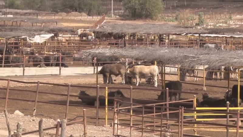 Se intensifican trabajos de barrido en establos ganaderos contra la brucelosis y tuberculosis bovina