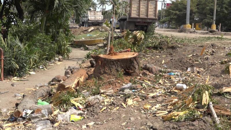 Talan árboles en medio de la renovación de la Rafael Buelna