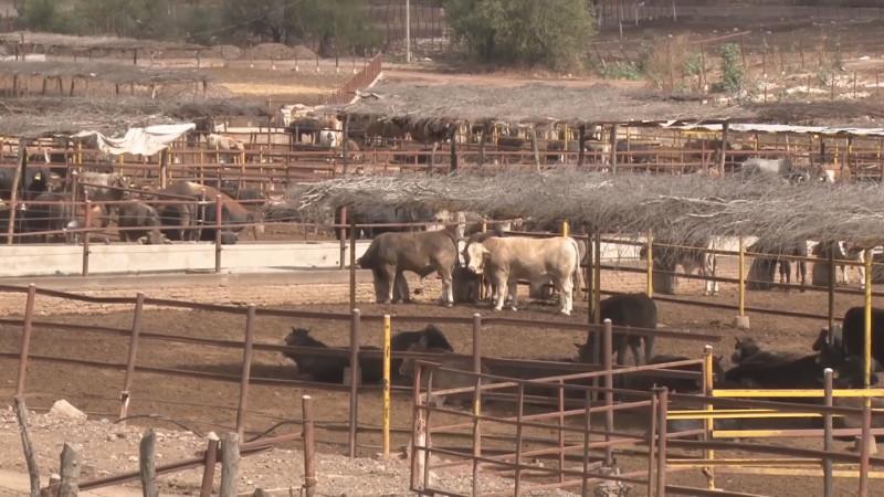 Personal de USDA apoya capacitación de zootecnistas para recuperar estatus sanitario