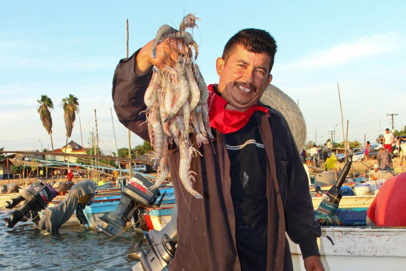 Instalan comité consultivo de manejo pesquero de Camarón en Mazatlán
