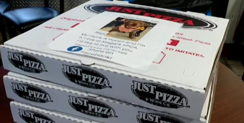 Pizzería pone fotos de perritos en sus cajas para ayudar en su adopción