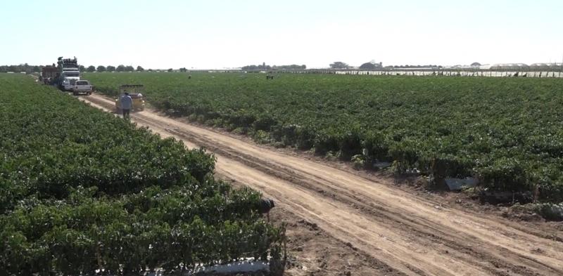 Falta liberación de terrenos para distrito de riego de Presa Picachos